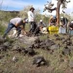 Videó: 155 fiatal óriásteknőst engedtek szabadon a Galápagos-szigeteken