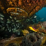 Az algák túlélését segíti egy most felfedezett előnyös tulajdonságuk