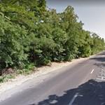 1800 fát vághatnak ki a kispesti Határ út szélesítése miatt