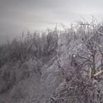 Még mindig nyögi a decemberi természeti csapást a Börzsöny