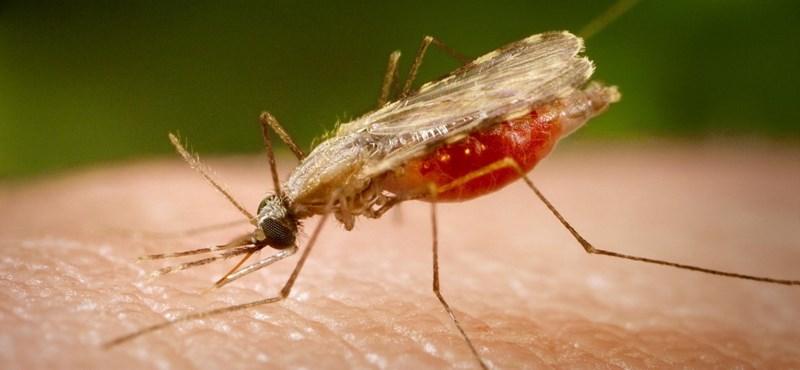 Az Antarktiszon is megjelentek a szúnyogok