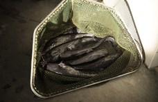 Magyar halakat nevel Algériában a Fradi volt focistája