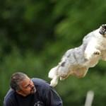 Nagy napra készülhetnek a kutyák