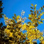 Az erdészek szerint az új erdőtörvény kritikusainak csak újra el kellene olvasnia a szövegét