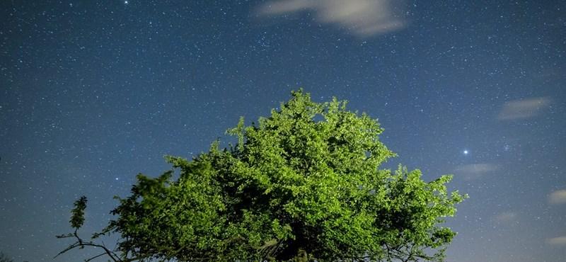 Ilyen szépnek ritkán látni fákat - brillírozott az MTI fotósa