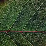 A fák is érzik, hogy baj van, de kérdéses, meddig tudnak küzdeni a klímaváltozás ellen