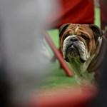 Hamilton vegánt faragott kutyájából, és állítja: azóta egészségesebb