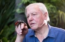 Érdemes lesz bekapcsolni a Spektrumot: 110 órányi lenyűgöző természetfilm jön David Attenborough 95. születésnapjára