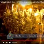 Videó: 150 milliónyi drogot és egy kisebb kannabiszerdőt találtak a budafoki dílernél