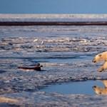 Megrepedt az Északi-sark egyik legvastagabb egybefüggő jégtáblája
