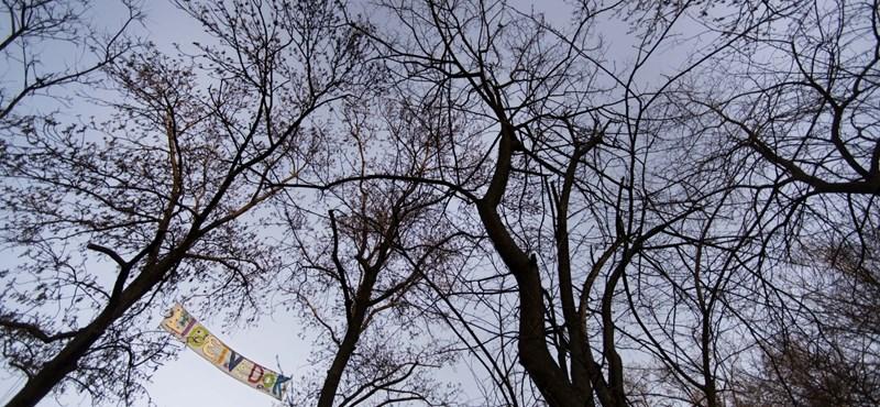 Kudarcra van ítélve a városligeti faátültetés?