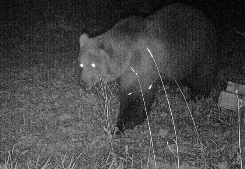 El oso no es un juguete, pero podemos defendernos de él de una forma más sencilla de lo que pensamos