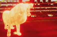 Gigantikus oroszlánhologram sétált végig egy argentin stadion lelátóján
