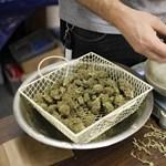 A marihuána gátolja a poszttraumás stressz kialakulását patkányoknál