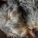 Gyurcsány egy kiskutyával bevetette a cukiságbombát a kampányban
