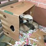 Olasz állatkínzó karmaiból mentettek meg 31 tündéri kiskutyát a zalai rendőrök