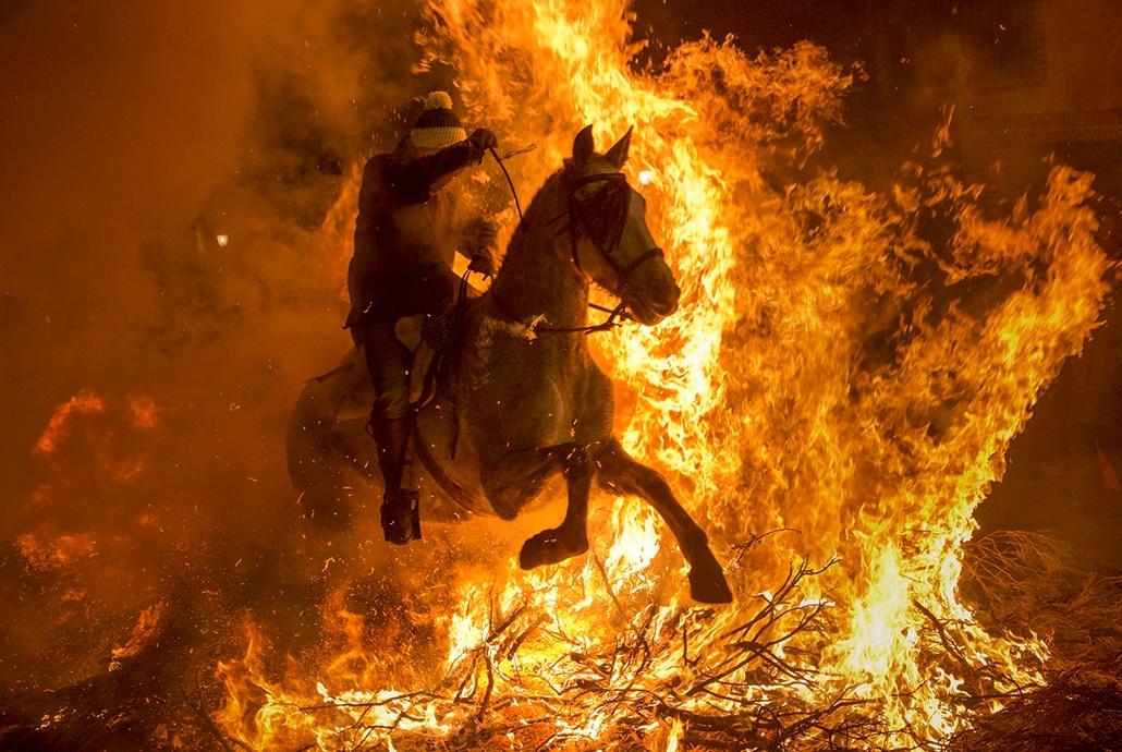 AFP - Nagyítás - Állati 2016 - 16.12.31. - Szent Antal tüze teljesen mást jelent egy spanyol kis falu, San Bartolome de Pinares lovasainak,  akik hagyományosan tűzugrással szereznek védelmet maguk és paripájuk számára minden év január 16-án.