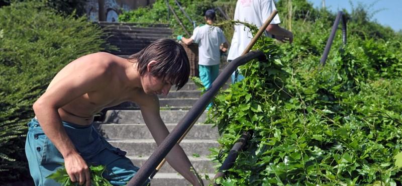 Közel hatvanezer külföldi dolgozót vár a kormány