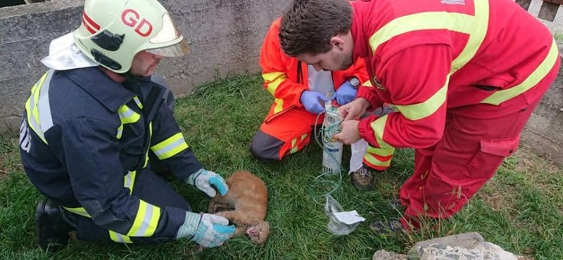 Ez a macska a gödöllői tűzoltóknak és mentőknek köszönheti az életét – fotók