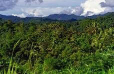 99 tudós számolta össze, hányféle növény van Új-Guineán – az eredmény 13 634