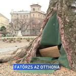 Egy fa törzsében él a budapesti hajléktalan, Péter