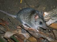 Eddig is bajban volt, most kritikus helyzetbe került 100 állat- és növényfaj Ausztráliában