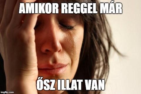 egyetlen hozott tornaterem mémek)