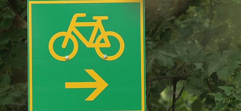 Kettős fasort vágtak ki a bringaút miatt Zalában