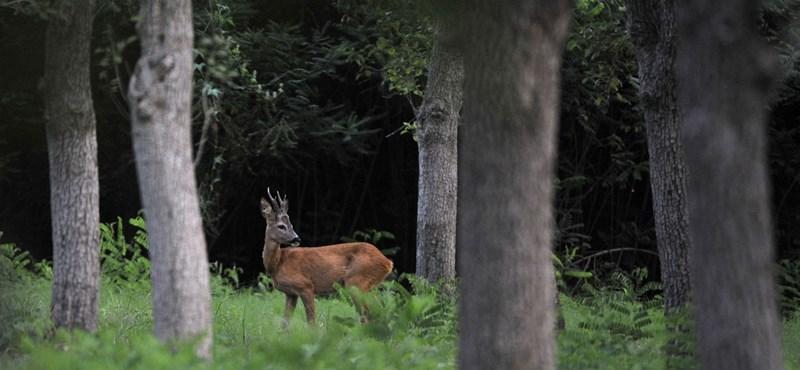 Balavány: A vadászok az igazi zöldek