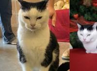 Gazdát keresnek a világ legrosszabb macskájának