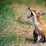 Csodálatos képek az év hazai természetfotósaitól - Nagyítás-fotógaléria