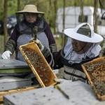 Megvan a magyar méz útja – csak pont a másik irányba kellene menni rajta