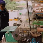 Vadállatokat árusító piacok ezreit zárják be Vietnamban