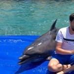 Hallott már ember-delfin duettet? Ha nem, most bepótolhatja!