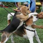 Úgy féltékenykednek a kutyák, mint az egyéves gyerekek