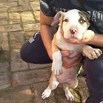 Két hónapos kiskutyát loptak el Hajdúsámsonban