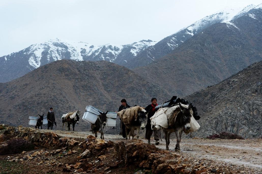 afp.14.04.04. - Afgán falubeliek szamarakkal szállítják a szavazóurnákat 2014. április. 4-én Észak-Afganisztánban
