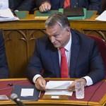 A többség az enyves aszatot hívná Orbánnak, de a júdásfa is jó esélyekkel indult