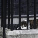 Kamerák előtt kergetett meg egy galambot a Downing Street macskája