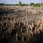 A klímaváltozás miatt áll üresen négy víztározó Szabolcsban