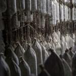 Jócskán megdrágulhat a téliszalámi is a sertéspestis miatt