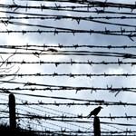 V. Lászlót és társait vidéki börtönökbe szállították Budapestről