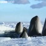 Így búcsúzik a BBC-től a legendás David Attenborough (videó)