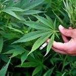 Nézőpont: Másfél millió ember támogatná a marihuána legalizálását Magyarországon