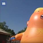 Hatalmas Trump-babát küldenek az égbe Londonban, hogy felbosszantsák az érkező elnököt – videó