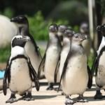 Fájdalmas veszteség érte a melbourne-i állatkertet