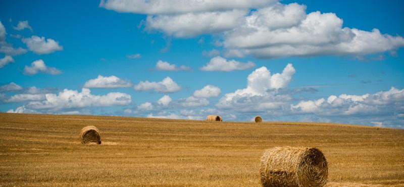 Másfél milliárdra is pályázhatnak mezőgazdasági kkv-k