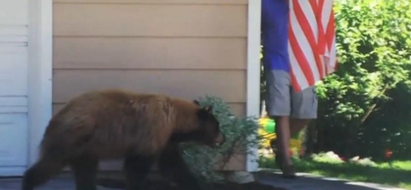 Videó: 5 másodpercben nem lehet ennél viccesebb ember és medve találkozása