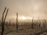A fajok tömeges kihalására figyelmeztetnek a világ legnagyobb tudósai