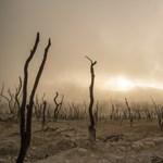 Klímaváltozás: szükségállapotot hirdetnek a tudósok